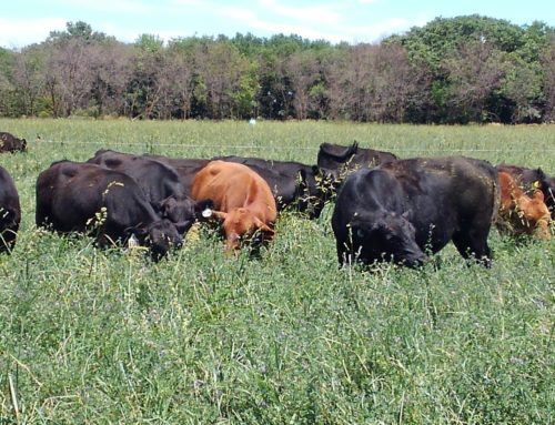 Why Settle for Grass-Fed? You Can Have REGENERATIVE!