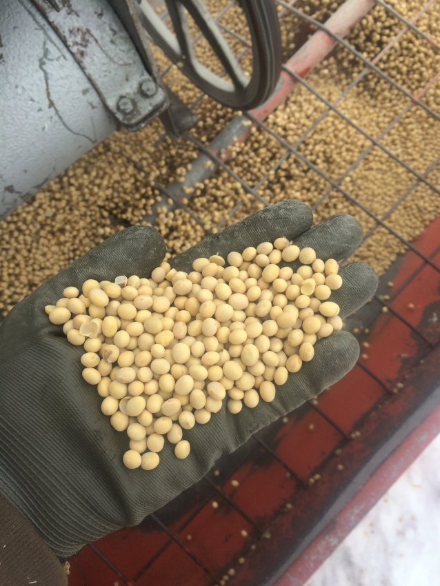 Our growers grow high quality, food-grade soybeans that are nonGMO.
